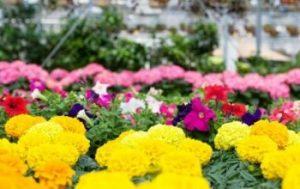 Livraison de plantes en pot